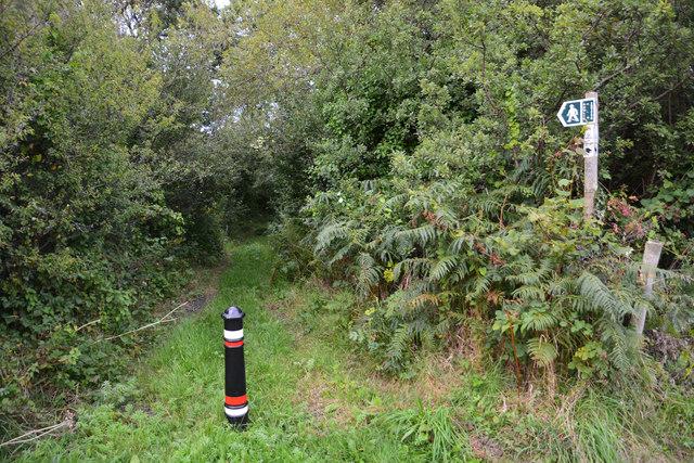 West Dorset : Grassy Path