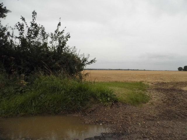 Field by Fyfield Road