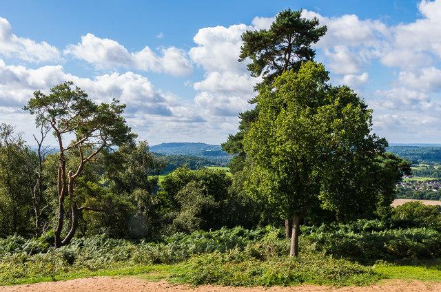 Towards Hascombe Hill