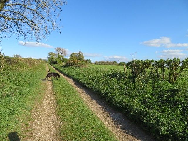Nutley Lane near Clump Farm