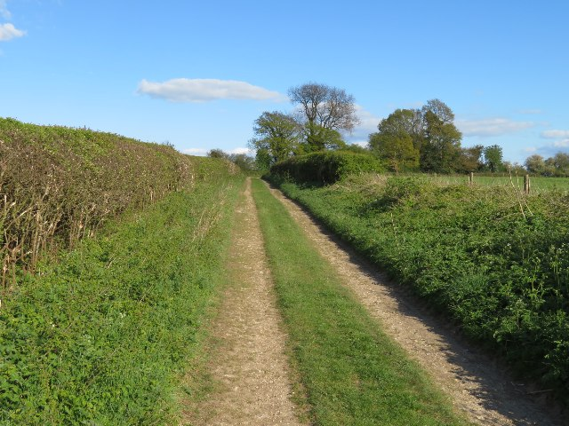 Nutley Lane approaching Dummer Clump