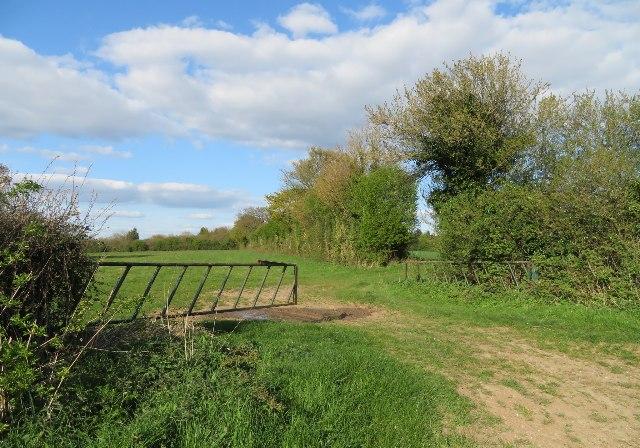 Open field gate - Nutley Lane