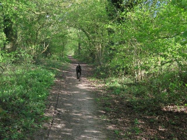Nutley Lane approaching Nutley Wood