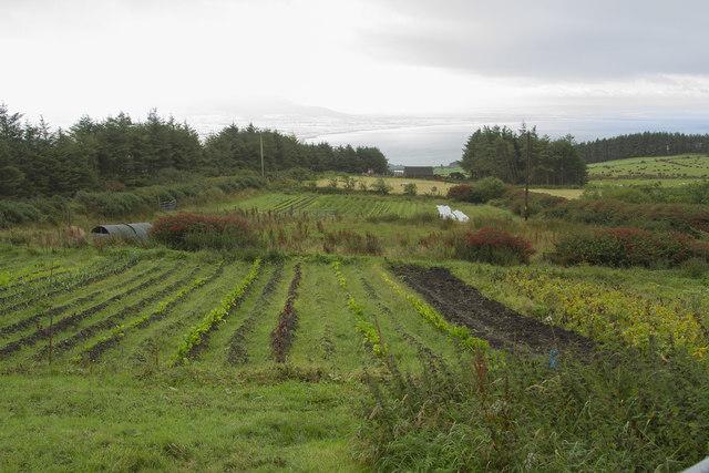 A farm garden
