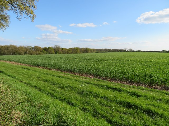 Farmland & Nutley Wood
