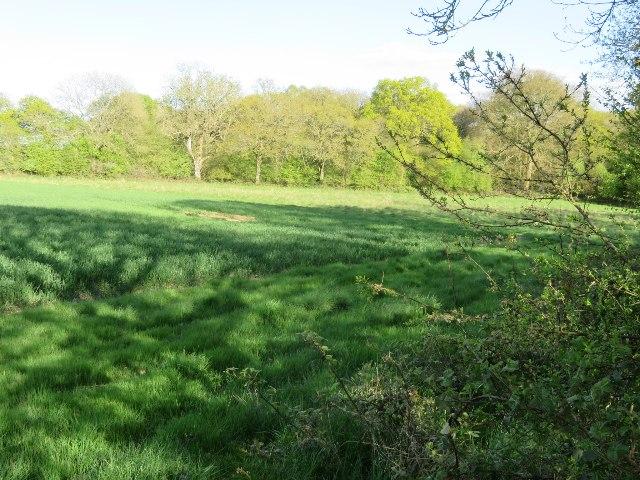 Farmland north of Nutley Lane