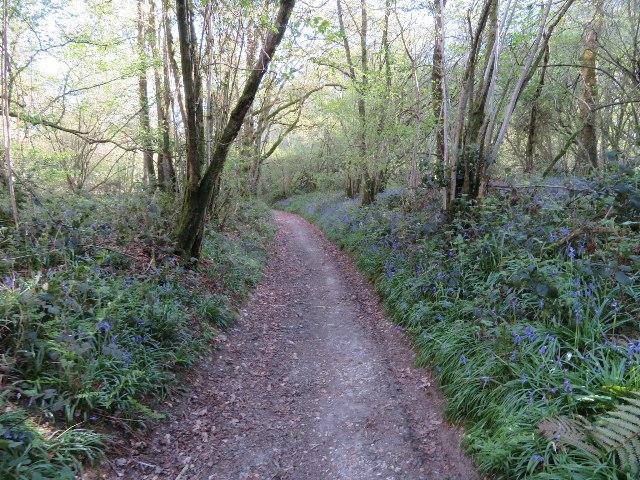 Nutley Lane in Nutley Wood