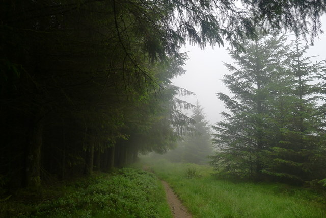 Entering Tweed Valley Forest Park