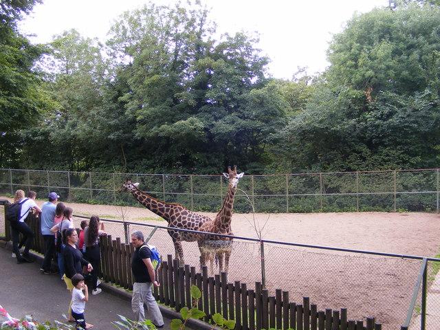 Giraffes Enclosure