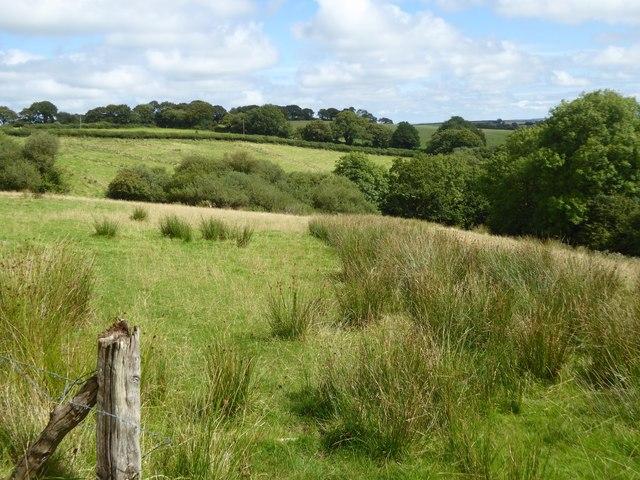 Marshy field near Horning Down Cross