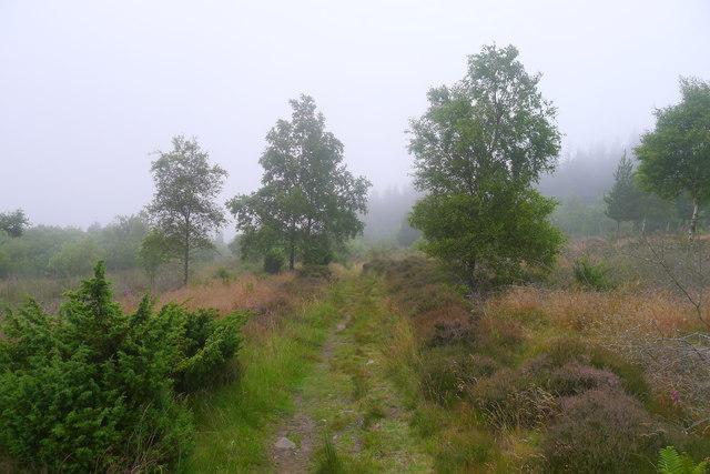 Minch Moor Road, Tweed Valley Forest Park