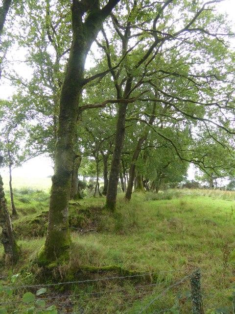 Trees on Heath Moor