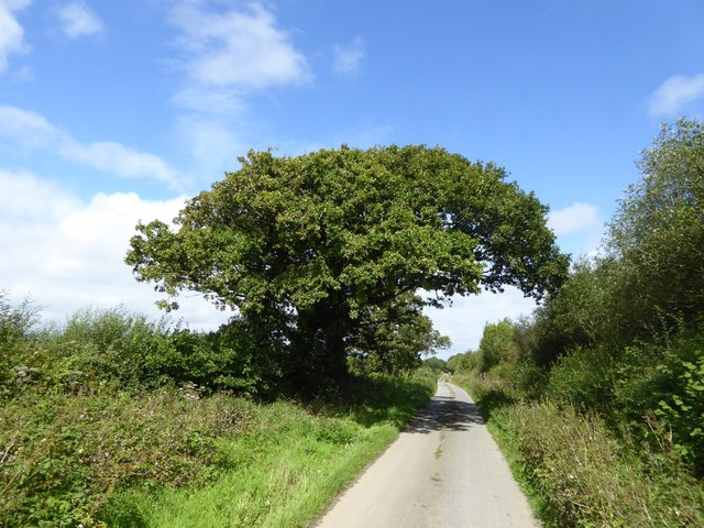 Tree overhanging the road to Durdon