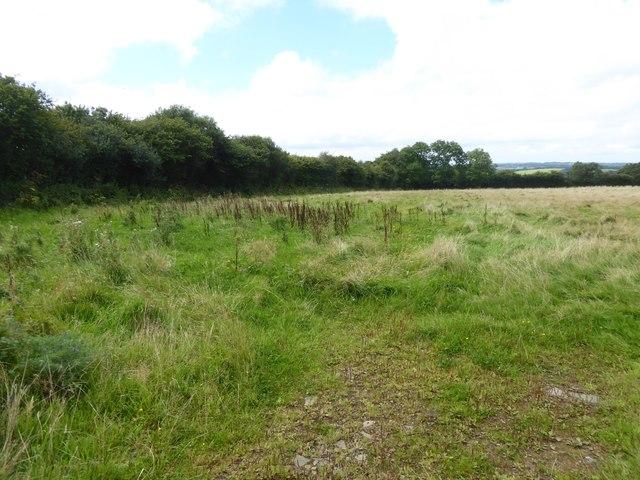 Marsh in a corner of a field at Durdon