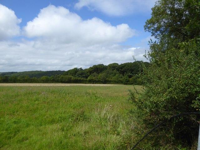 Woodland at Lambert Cross