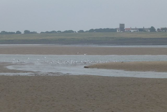Seagulls in water channel
