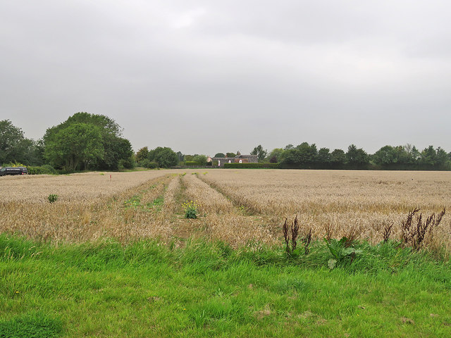 Kirtling: a wheatfield and a threatening sky