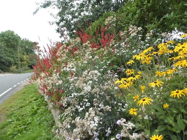 Garden on Fyfield Road, Shelley