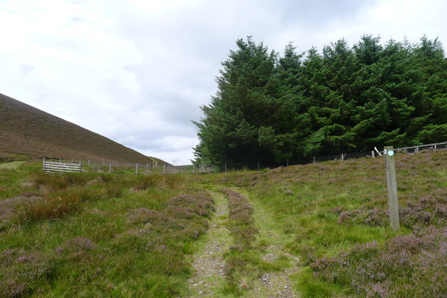 Approaching the edge of Cardrona Forest