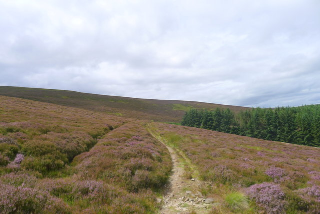 Heather moorland  south of Cardrona Forest
