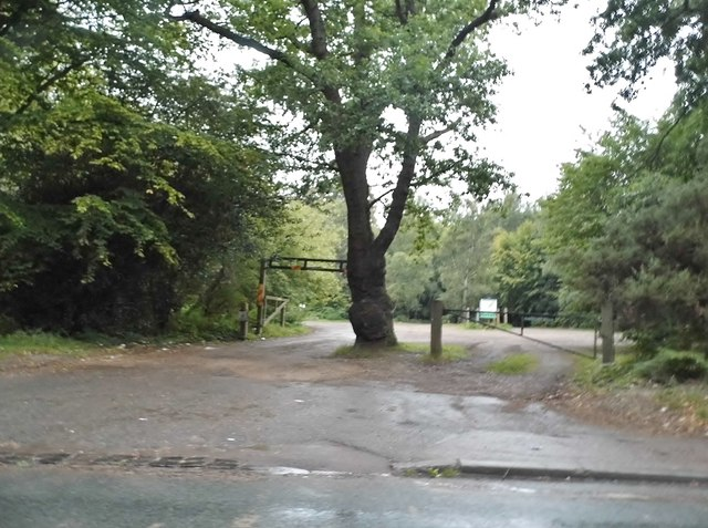 Car park on Epping Forest