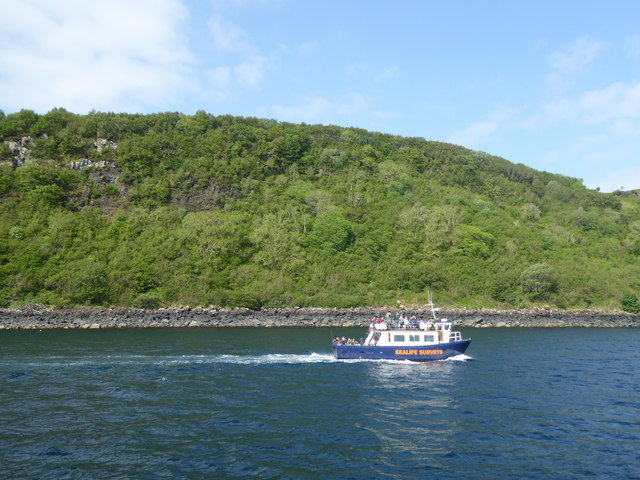 Tourist vessel off the wooded shore north of Tobermory