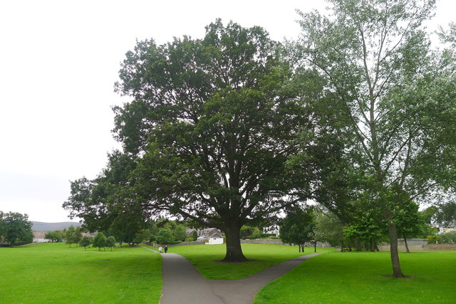 106 year old oak tree, Victoria Park, Peebles