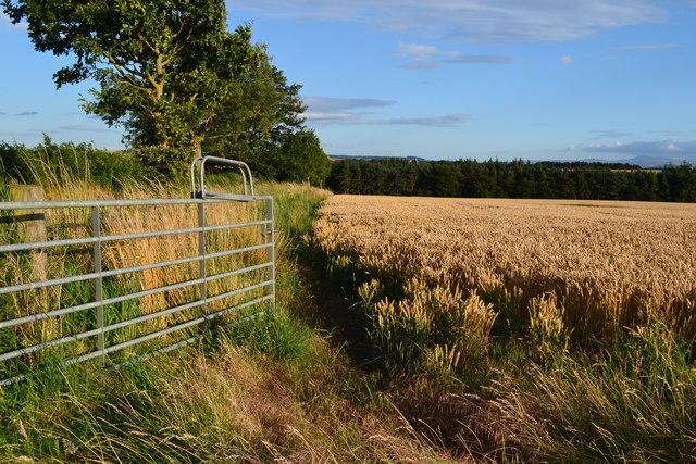 Field and gate near Horn Dean