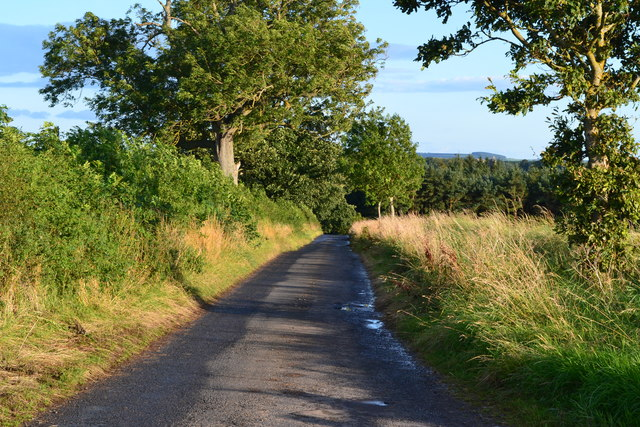 Lane descending towards Horn Dean