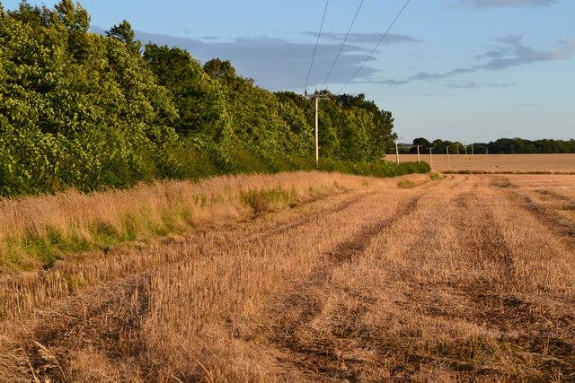 Field edge near Tweedhill