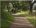 SJ2885 : A cyclist overtakes the horseriders by Ian Greig