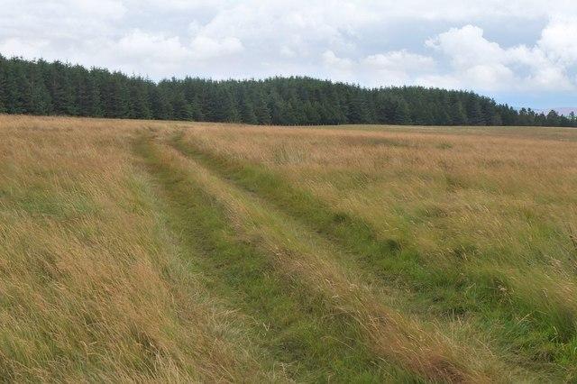 Track on Wull Muir