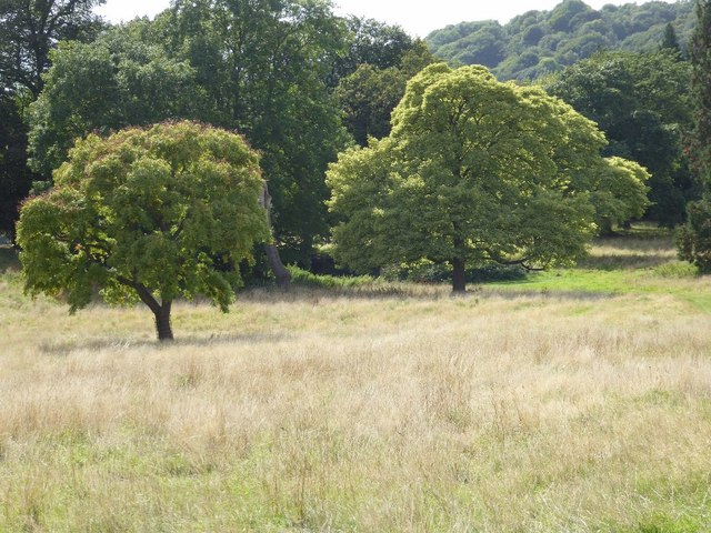 Trees in ground adjacent to Malvern Common
