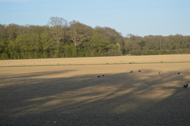 Field near Capel Wood
