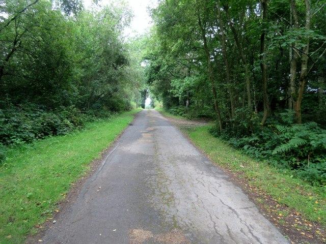 Lane from Blackwool Farm