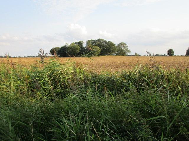 Langham Plantation