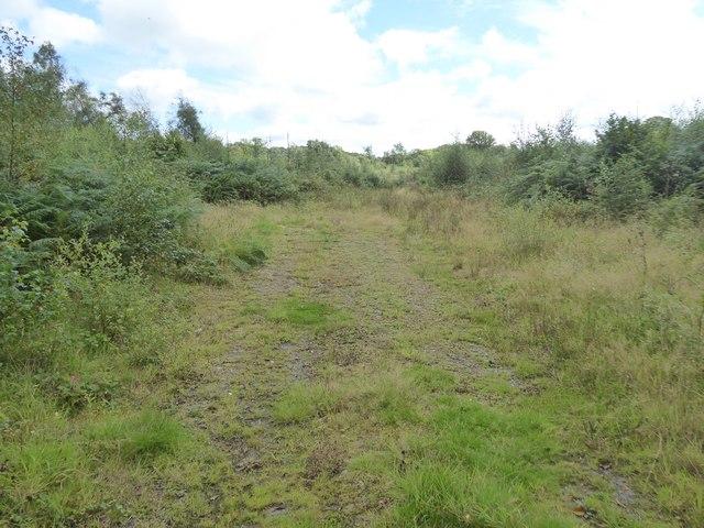Hookmoor Wood