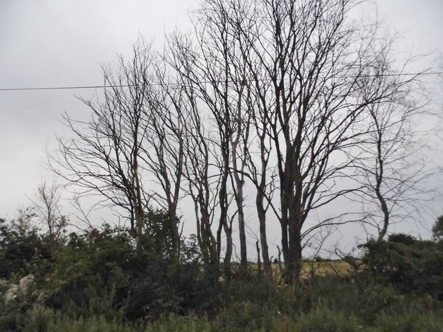 Trees by Rye Hill Road