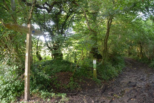 West Dorset : Mary's Well Lane