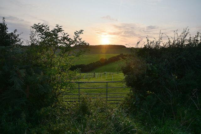 West Dorset : Grassy Field & Gate