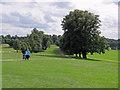 SK5339 : Wollaton Park: down the avenue by John Sutton