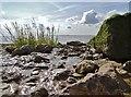 TA1128 : Humber Estuary : Week 34