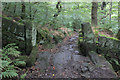 SD9929 : Footpath in Spring Wood by Chris Heaton