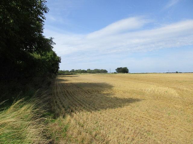 Stubble field near Rimswell
