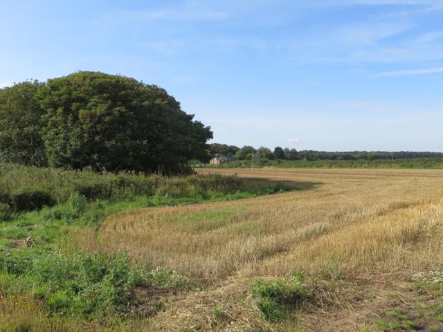 Fields north of Grimston