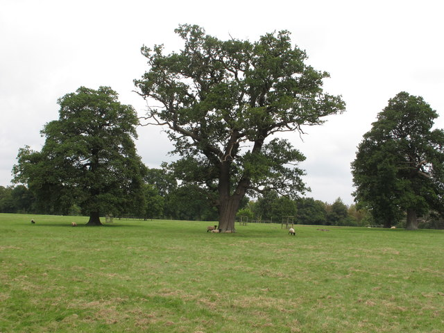 Trees and sheep in Thame Park