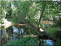 TQ0481 : The River Colne west of Little Britain Lake (2) by Mike Quinn