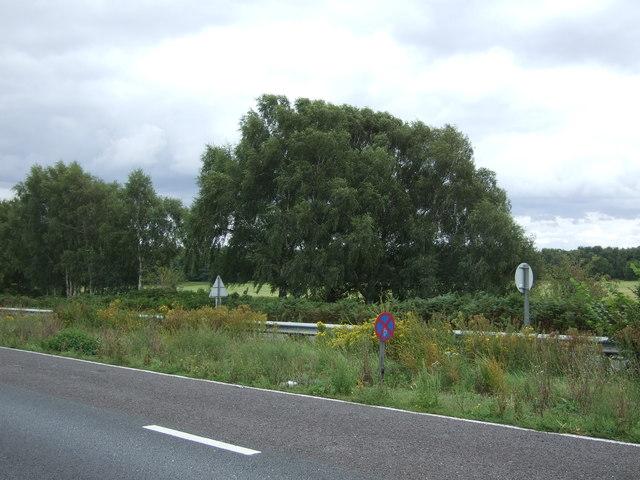 Trees beside the A11, Bridgham Heath