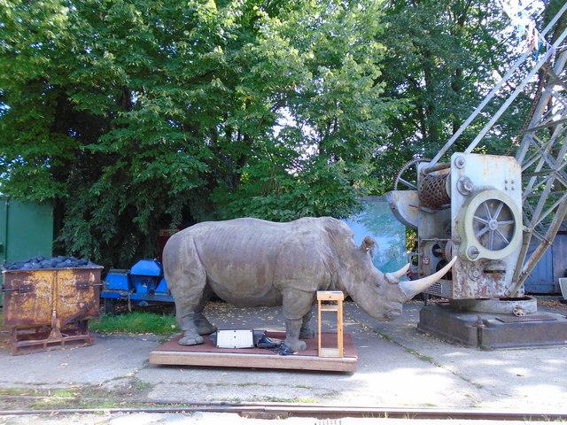 Rhinoceros model - Fawley Hill