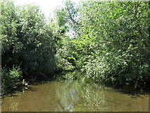 TQ0481 : A branch of the River Colne by Packet Boat Lane by Mike Quinn